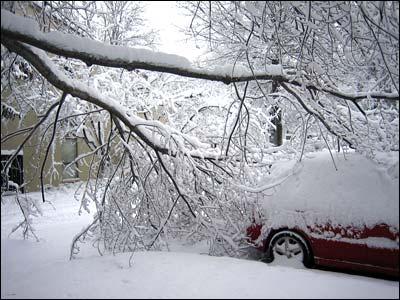 Snow Tree 2